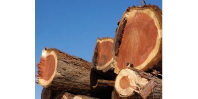 Analysing preservatives in recycled and treated wood for wood industry