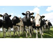 Managing livestock diets to reduce greenhouse gas emissions