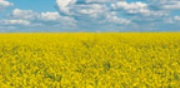 International testing for biofuels - Energy - Bioenergy