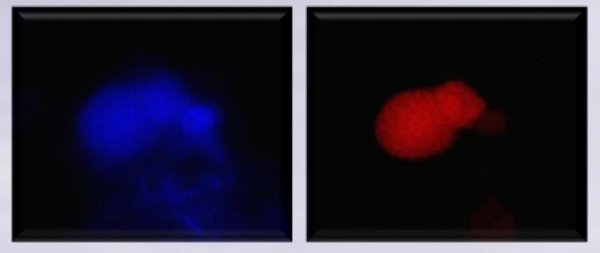 Left (blue) : All Micro-organisms Right (red) : Autotrophic Denitrification (by anammox-organisms)