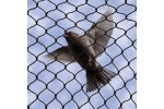No Knot - Bird Netting