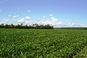 2014 Guide on Corn, Soybean, Wheat and Alfalfa Available for Growers