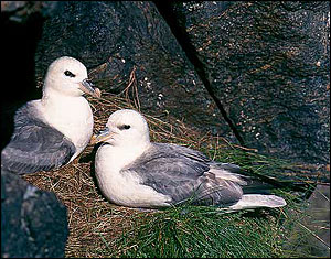 New proof of Arctic toxins