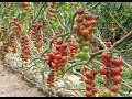 Israel Agriculture Technology: Desert Agriculture Technology in Israel Video