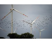 Advocacy Group: Wind Turbine Rules Needed to Protect Birds