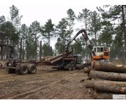 House passes bill to hasten timber projects in forests
