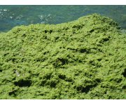 Ohio River`s huge algae bloom a warning for water suppliers