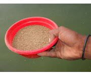 Scientists say feeding fish soy, not fish, more sustainable