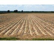 California farmers reap record sales in record drought