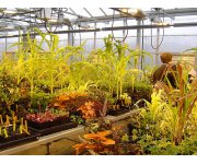 IDCs: innovation engine for horticulture
