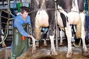 Higher milk yield by giving cows a name: fact or fiction?