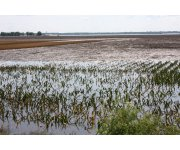 Assessing crop damages after extreme weather