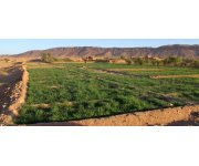 Egyptian Experimental Farm Reveals Possible Market for `Sewage Farming` Agricultural Products