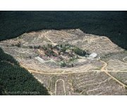 Commission-funded report blames Europe for global forest destruction