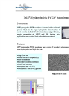 MS - Model PVDF - Hydrophobic Membrane Brochure