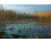 American Carbon Registry Initiates Approval of World`s First Carbon Offset Methodology for Deltaic Wetland Restoration