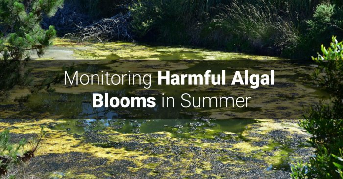 Monitoring Harmful Algal Blooms in Summer