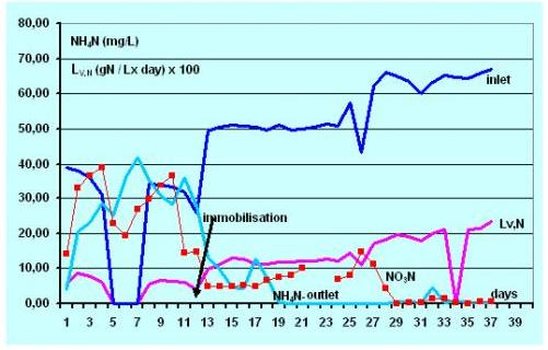 Nitrification of high salinity chemical effluents