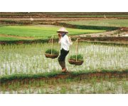 Climate change `may boost South-East Asian agriculture`