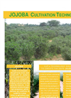 JOJOBA CULTIVATION TECHNOLOGY