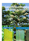 Calophyllum inophyllum  Cultivation Technology