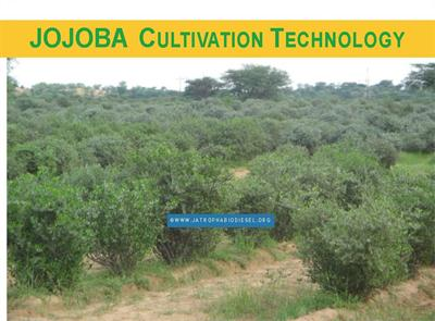 CJP - Model 2014 - JOJOBA CULTIVATION TECHNOLOGY