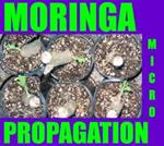 MOMAX - MORINGA MICRO-MASS PROPAGATION  TECHNOLOGY