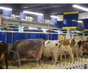 Report On the Dairy Market and the `Milk Package`