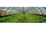 High quality gas sensor solutions for horticulture