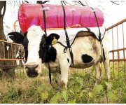 Monitoring methane emissions from agriculture and dairy farming