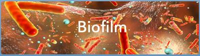 Jenfitch - Biofilm for Industrial Water Treatment System