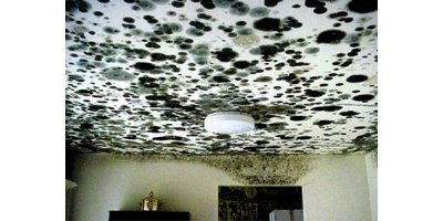 Mold & Bacteria Services