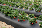 Growers Face Water License Regime – Rainwater Harvesting Tanks Can Ease Pressure