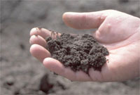 Absorbing organic pollutants in soils