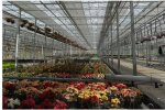 Venlo - Glass Greenhouse
