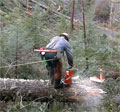Local control can save forests, says new US research
