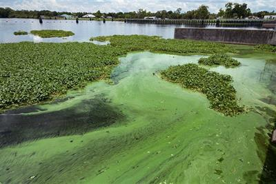 Toxic Blue-Green Algae Treatment