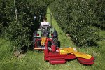 Fischer Mulchgeräte - Model SL Series - Fruit Growers Mower