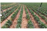 T-L Irrigation - Precision Mobile Drip Irrigation System (PMDI)