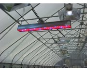 Light-emitting Diode Sole-source Lighting Effective in Bedding Plant Seedling Production
