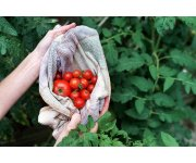 Call for abstracts: XIV International Symposium on Processing Tomato