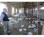 Positive Results for Soybean Meal from the Afghan Poultry Feeding Trials