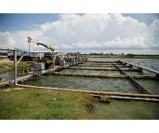 The Soy Checkoff Continues to Find New Customers in Global Aquaculture