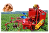 Potato Harvester Working Video