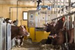 DeLaval - Model FM - Cow Feed Wagon