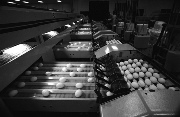Researchers Identify Important Energy Cost Savings in Poultry Processing