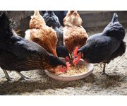 Poultry Protein & Fat Seminar to Focus on Maintenance and Safety Best Practices in Rendering