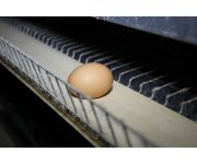 USPOULTRY Releases New Video Series Highlighting Poultry and Egg Farm Environmental Stewardship