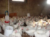 Poultry Protein & Fat Seminar to Focus on Safety and Increased Productivity