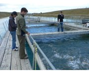 New jobs created by stronger rules, say BC's salmon farmers